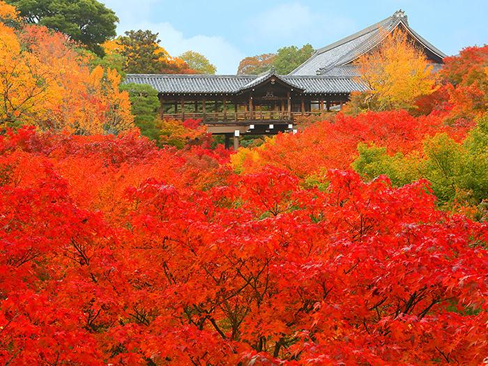 秋の京 西へ東へ紅葉狩り1