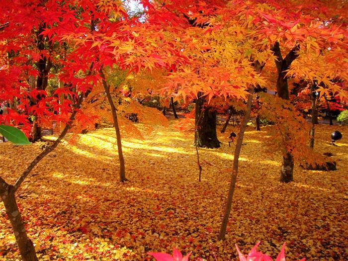 秋の京 西へ東へ紅葉狩り4