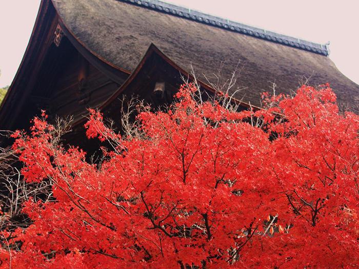 秋の安芸 毛利,高杉,紅葉谷2