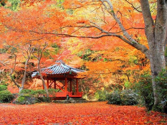 秋の安芸 毛利,高杉,紅葉谷4